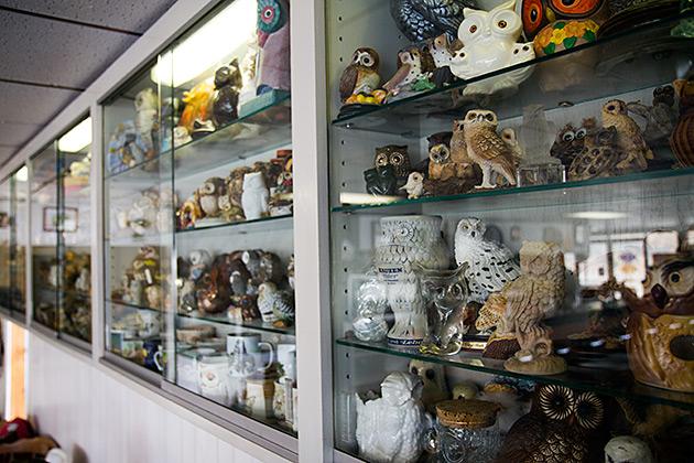 Owl Collection Idaho