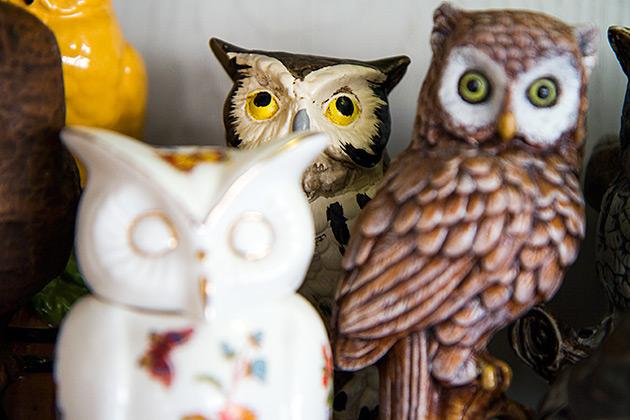 Rolling-Eye-Owl