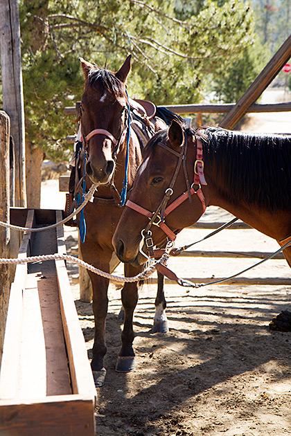 Idaho Horses