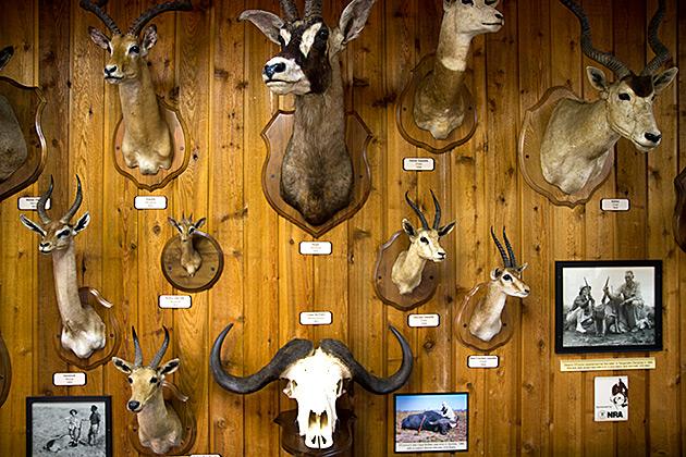 Hunting Museum Lewiston