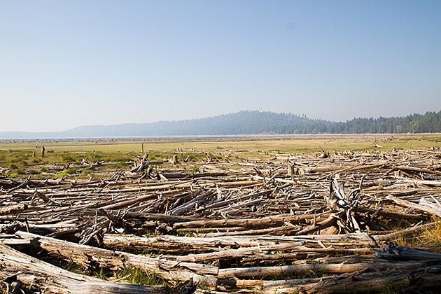 Dead-Tree-Of-Idaho