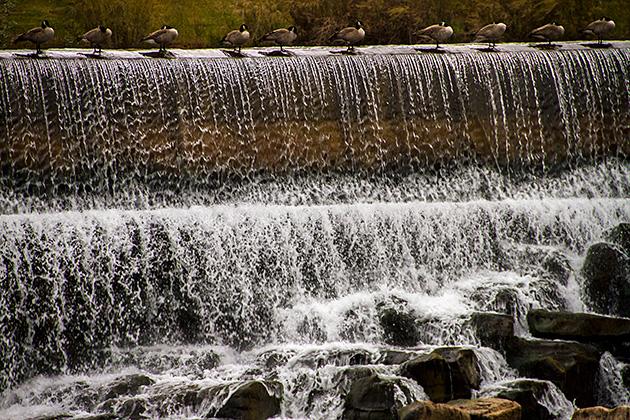Idaho-Fall-Ducks