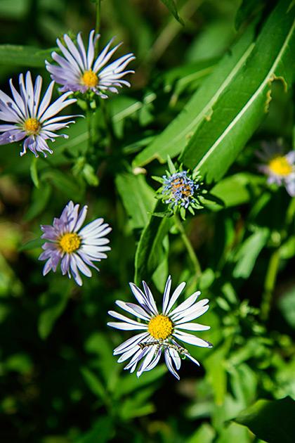 Flowers of Idaho