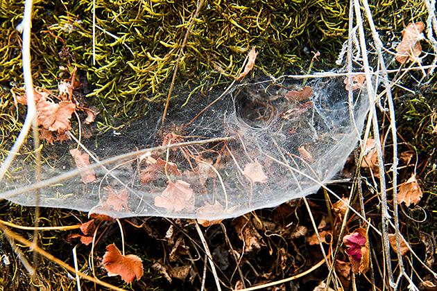 Crazy Spider Net