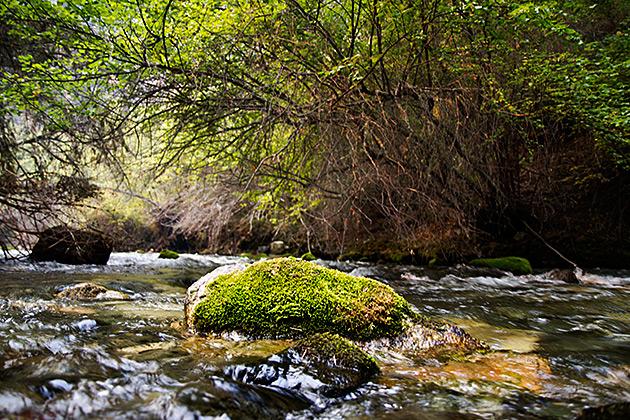 Rivers Of Idaho