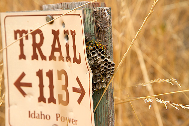 Trails Wasps