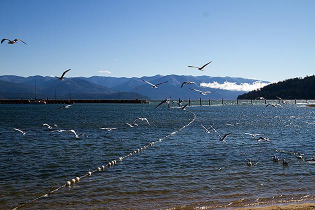 Seaguls Idaho
