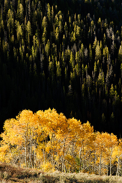 Golden Fall Idaho