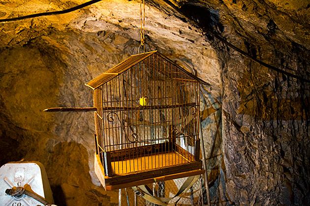 Mining Bird