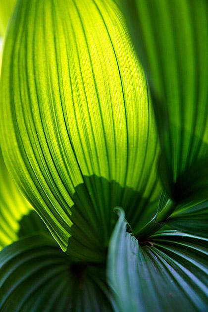 Fauna Idaho