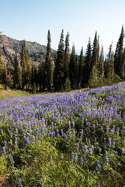 Idaho Flower Fields