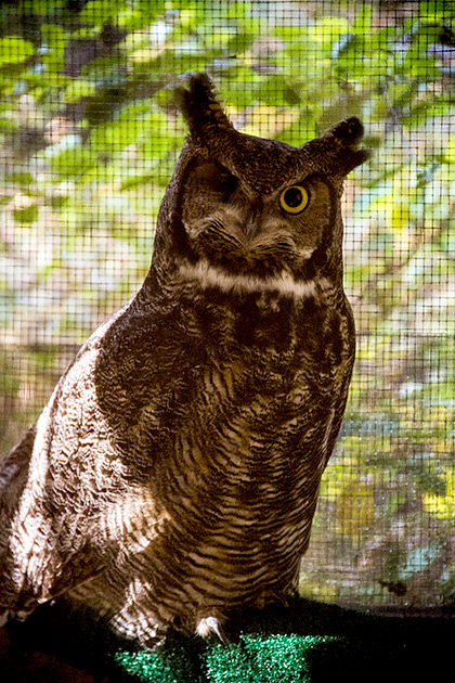 One-Eyed-Owl