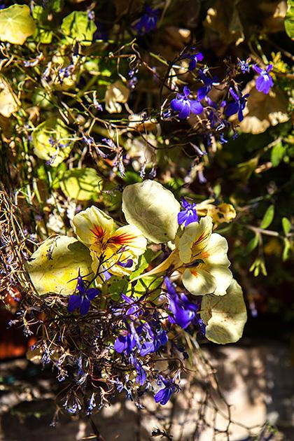 Idaho-Flowers