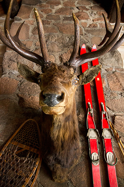 Deer-Idaho
