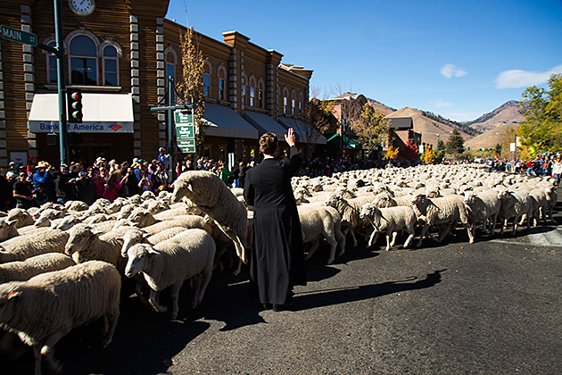 Sheep Blessing