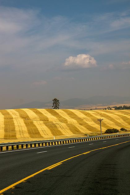 Bizarre-Idaho