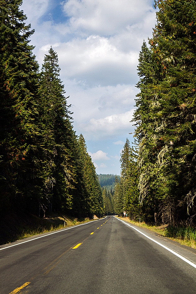 Giant-White-Pine-Street