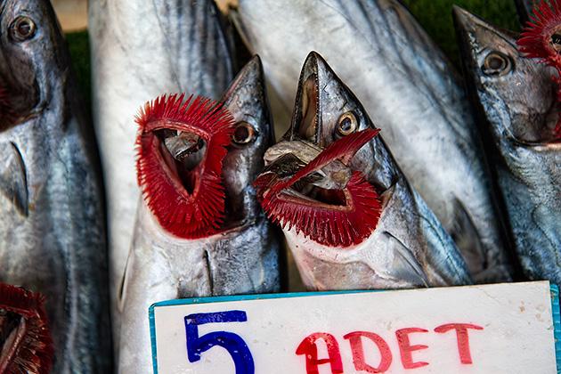 Fisch-Kiemen