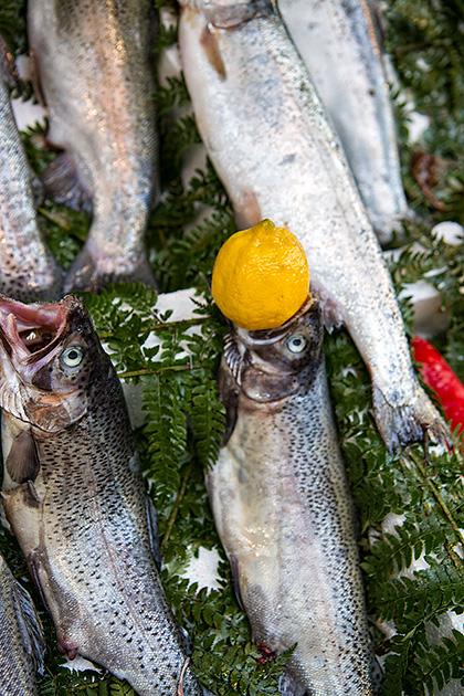Lemon-Fish-Munch
