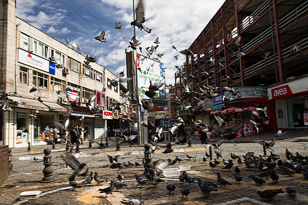 Pigeons-Istanbul