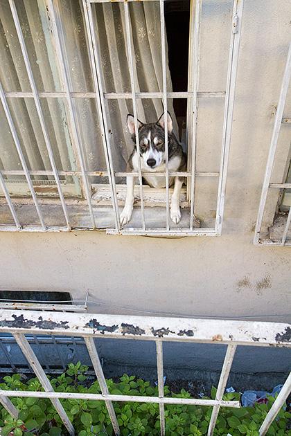 Prison-Dog-Istanbul