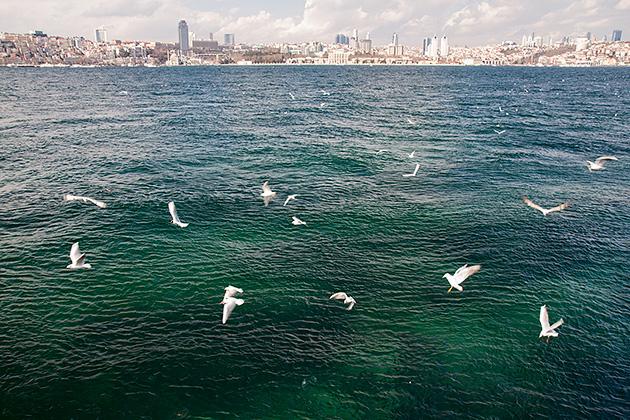 Seagull-Bosphorus