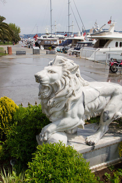 Istanbul Lion