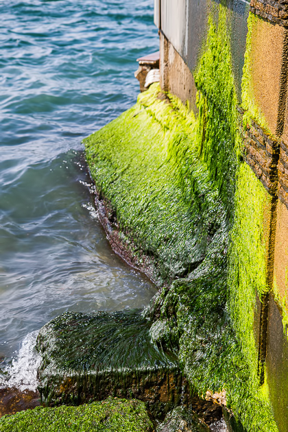 Çengelköy Moss