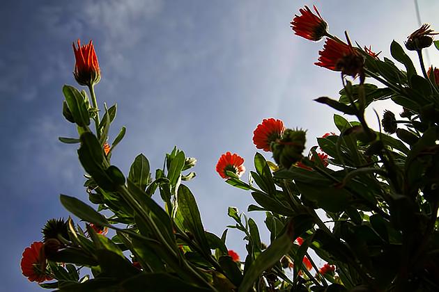 Burgazada-Flowers