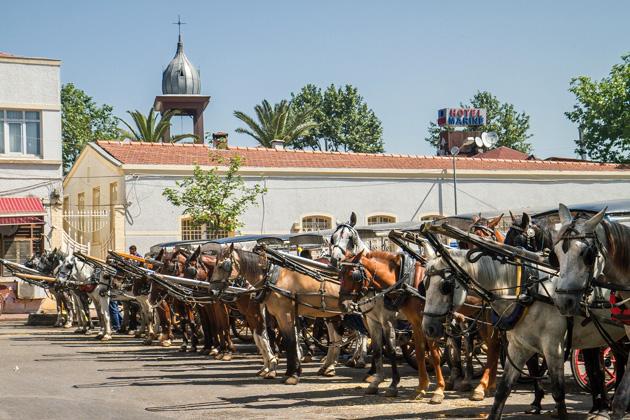 Horse Rental Büyükada