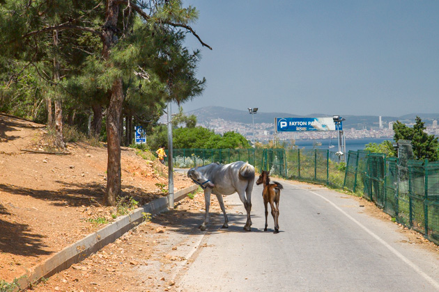 Street Horse