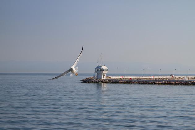 Büyükada Seagull