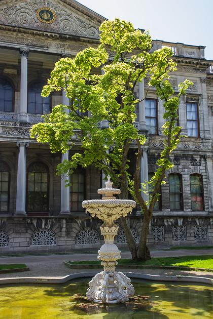 Dolmabahçe Trees