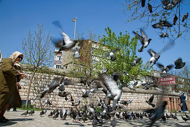 Feeding-Pigeons