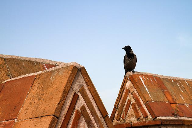 Istanbul-Bird