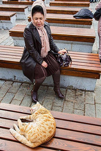 Cat-Sleeping-in-the-streets
