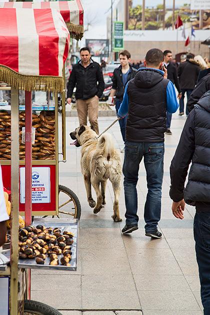 Huge-Dog-Istanbul