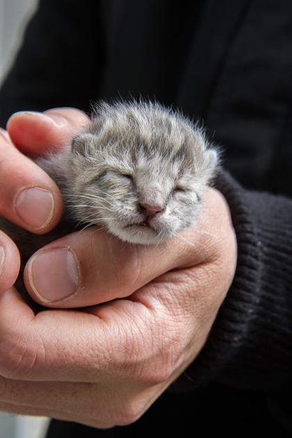 Kitten Gülhane Istanbul