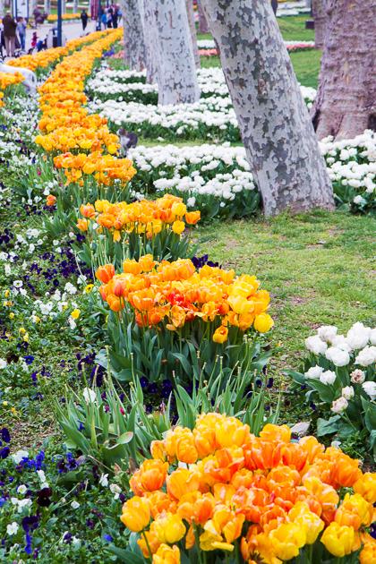 Spring Gülhane Istanbul