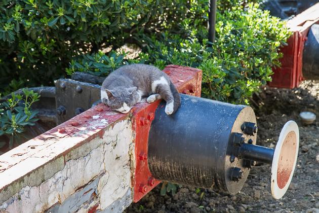 Haydarpaşa Cat
