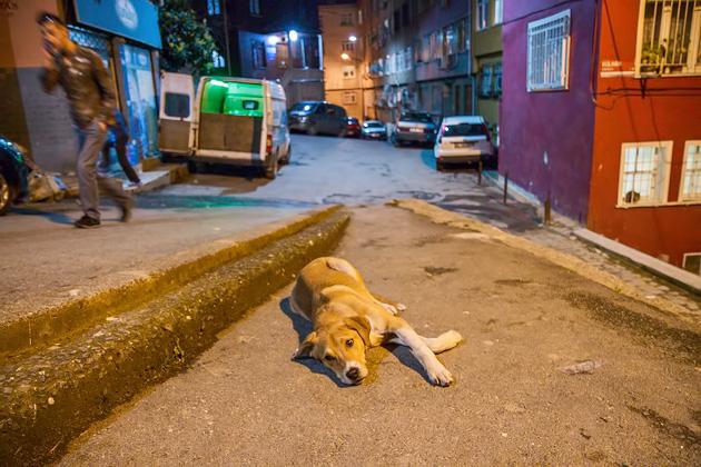 Doggy Sleep Istanbul