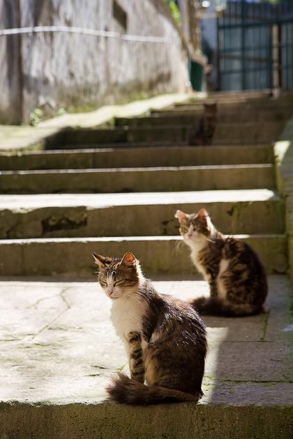 Istanbul Cat Blog