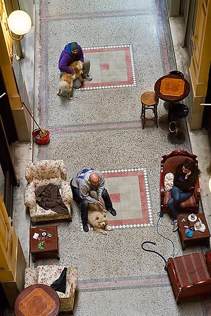 Suriye-Doggy-Hang-Out