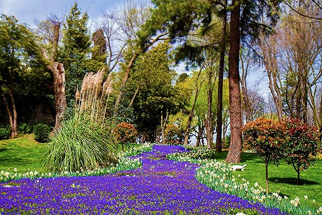 Blue-Flower-Field