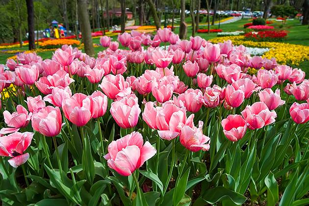 Tulip-Garden-Istanbul.