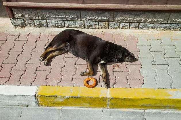 Simit Dog