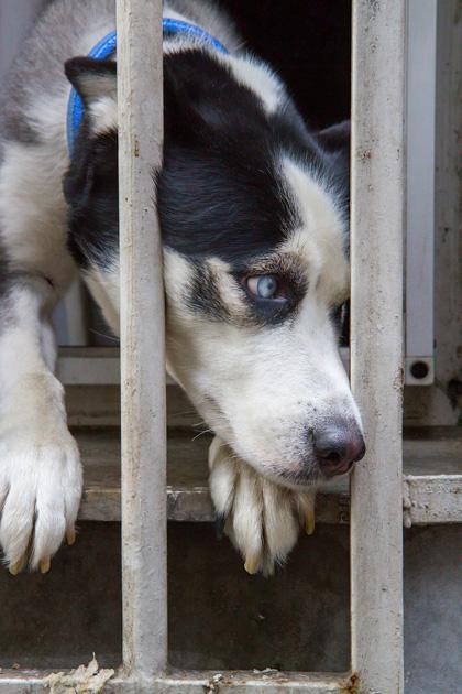 Sad Little Doggy Istanbul
