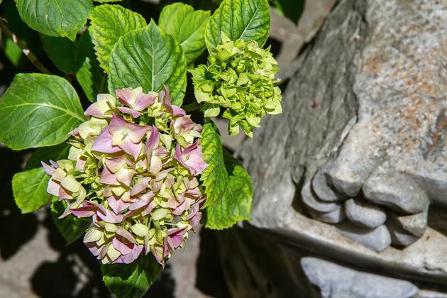 Sakip Sabanci Museum Flowers