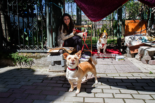 Doggy-Istanbul