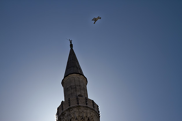 Mosque-Bird